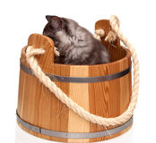 Cute grey cat sitting in wooden barre Royalty Free Stock Image