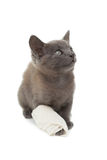 Cute grey kitten with a bandage on its paw Royalty Free Stock Image