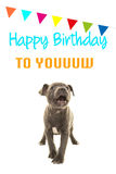 Cute grey stafford terrier puppy dog singing happy birthday to you on a birthday card. On a white background Stock Image