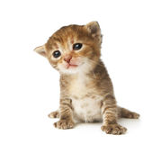 Cute grey striped kitten isolated Royalty Free Stock Images