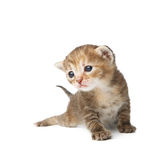 Cute grey striped kitten isolated Stock Images
