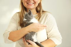 Cute grey and white kitten sitting on the hands of the woman stock photo