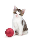 Cute grey and white kittensitting next to a Christmas Ornament o Stock Photos