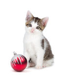 Cute grey and white kittensitting next to a Christmas Ornament o Royalty Free Stock Photos