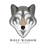 Cute grey wolf Royalty Free Stock Images