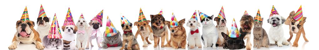 Cute group of many cats and dogs ready for party royalty free stock photo