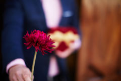 Cute guy holding red beautiful flower Stock Photography
