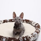Cute hairless sphinx cat isolated on white Royalty Free Stock Photo