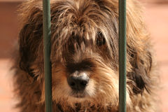 Cute hairy dog Royalty Free Stock Photo