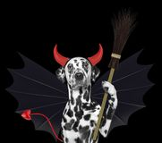 Cute halloween dog in bat devil costume with broom - isolated on black Royalty Free Stock Image