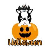 Cute halloween graphics illustration, bat, boston terrier and pumkin.