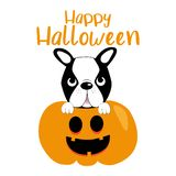 Cute halloween graphics illustration, boston terrier and pumpkin.