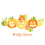 Cute Halloween pumpkins and red cat vector design objects Stock Photo