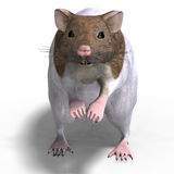 Cute hamster Stock Photography