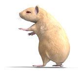 Cute hamster Stock Images