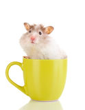 Cute hamster in cup. On  white Stock Photos