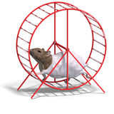 Cute hamster in a hamster wheel Royalty Free Stock Image