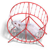 Cute hamster in a hamster wheel Royalty Free Stock Photo