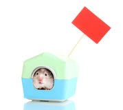 Cute hamster in house Stock Photography