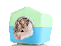 Cute hamster in house Royalty Free Stock Images