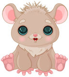 Cute Hamster Royalty Free Stock Images