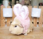 A cute hamster mouse wearing a pink bunny headband for Easter stock photography
