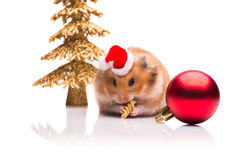 The cute hamster with santa hat isolated on white Stock Photography