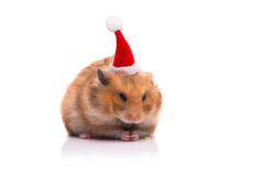 The cute hamster with santa hat isolated on white Royalty Free Stock Photos