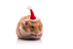 The cute hamster with santa hat isolated on white Royalty Free Stock Images