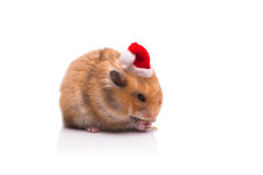 The cute hamster with santa hat isolated on white Stock Photos