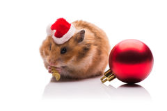 The cute hamster with santa hat isolated on white royalty free stock photo