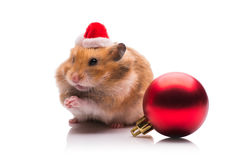 The cute hamster with santa hat isolated on white Stock Photo