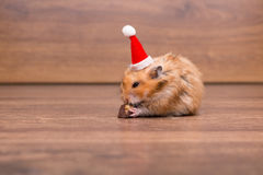 The cute hamster with santa hat on the table Royalty Free Stock Photos