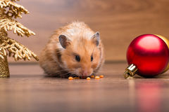 The cute hamster with santa hat on the table Stock Photos