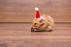 The cute hamster with santa hat on the table Royalty Free Stock Images