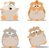 Cute hamsters Stock Photography