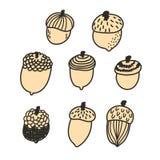 Cute hand drawn acorn vector set Royalty Free Stock Photo
