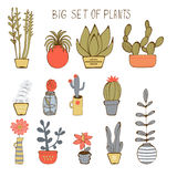 Cute hand drawn collection of house plants Stock Photography