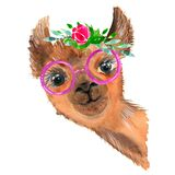 Cute hand drawn llama with a wreath of flowers. Bouquet of flowers