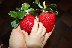 Cute hand touch strawberries Stock Photos