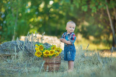 Cute handsome boy wearing jeans close to basket with sunflowers and stones. Stock Image