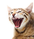 Cute happy cat. Cute happy cat over white background Stock Photos