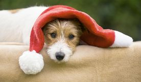 Cute happy christmas gift pet dog puppy royalty free stock photos