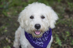 Cute happy dog Royalty Free Stock Photos