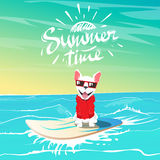 Cute happy dog and hipster swimming on surfboard Stock Image