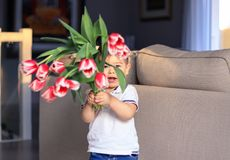 Cute happy little boy holding bouquet of red tulips in front of his face greeting mother or sister or grandmother at home. Mothers royalty free stock photography