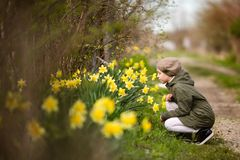 Cute happy little girl in the spring country smelling yellow daffodils stock image