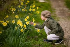 Cute happy little girl in the spring country smelling yellow daffodils stock images