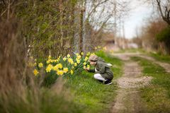 Cute happy little girl in the spring country smelling yellow daffodils royalty free stock photos