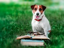 Cute happy smiling pet jack russel terrier sitting outside on green grass next to an open book and eyeglasses . Dog reading in par. K at sunny day. Education and stock photo